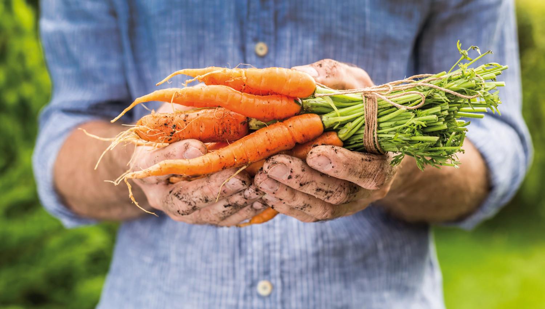 Lagerung von Karotten