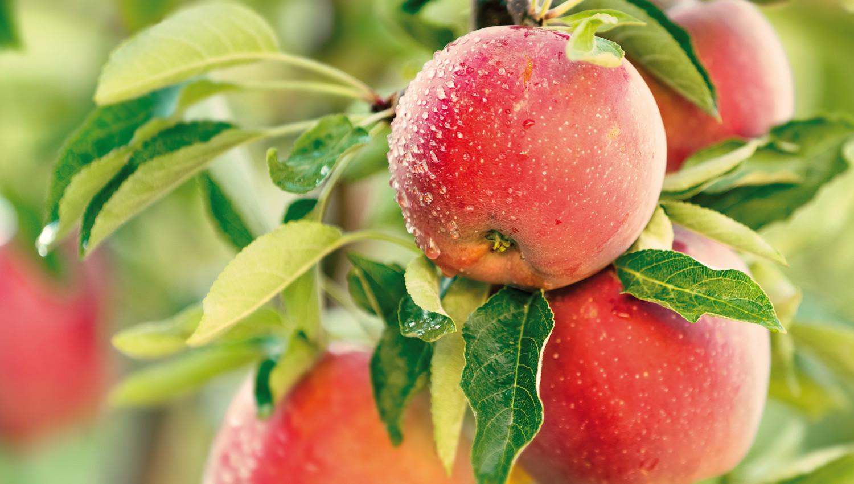 Lagerung von Obst